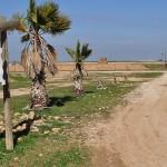 חוות הדקלים